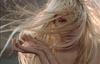 Как лечить слабые и ломкие волосы